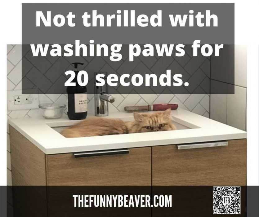 not-thrilled-with-20-sec-paw-wash